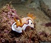 Exmouth - Nudibranchs & The small stuff :